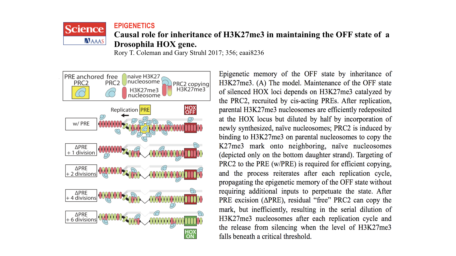 Causal role for inheritence of H3K27me3 in maintaining the OFF state of a Drosophila HOX gene