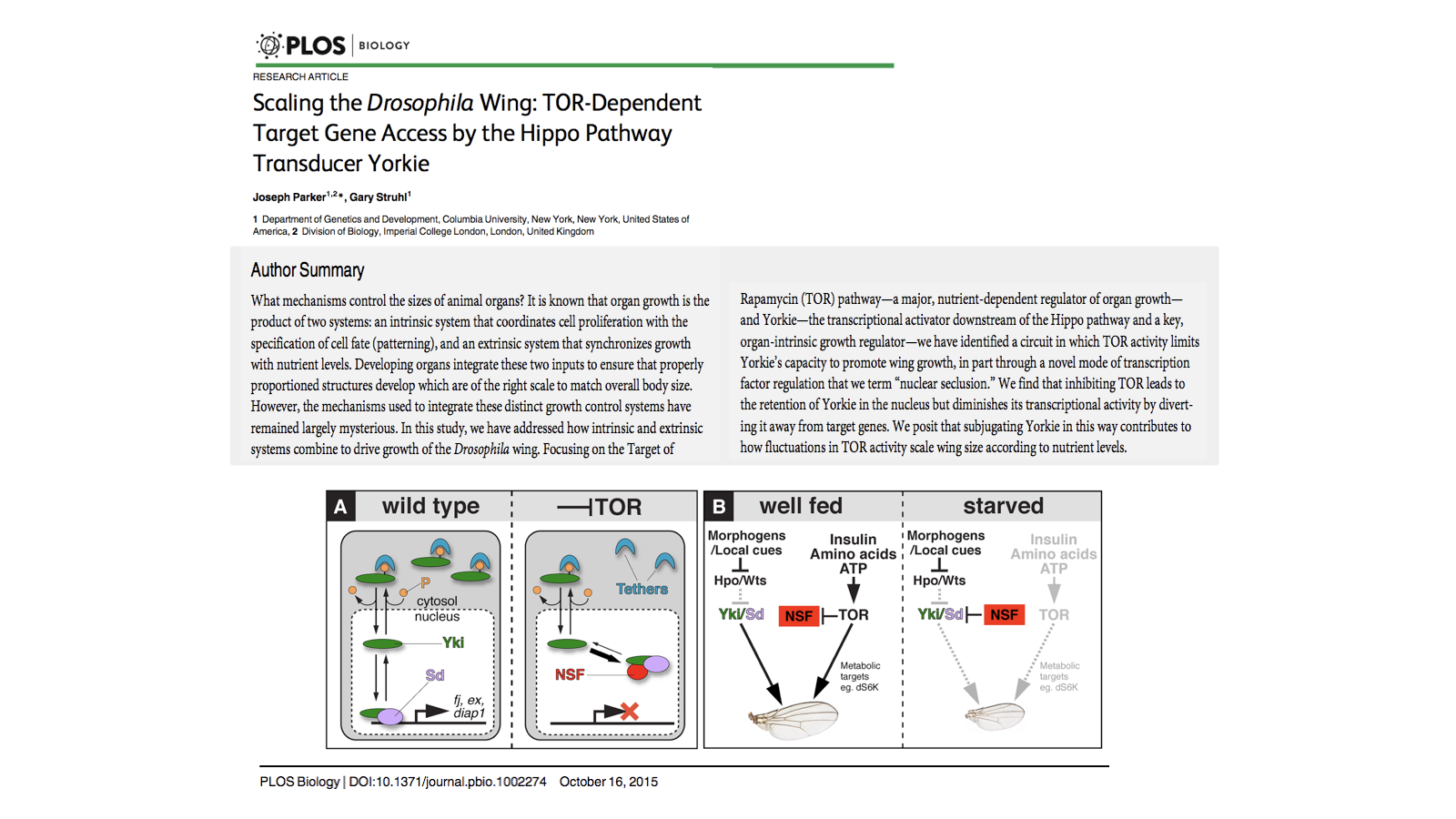 Scaling the Drosophila Wing: TOR-Dependent Target Gene Access by the Hippo Pathway Transducer Yorkie